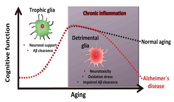 Inflammation & Alzheimer's disease